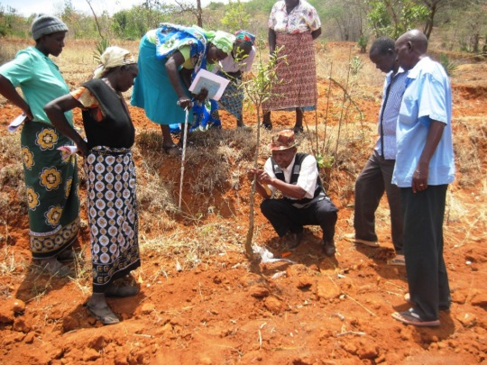 Tawa Farmers learning to graft from Mr. Peter