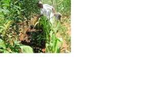 Benedita waters her Forest Garden tree seedlings