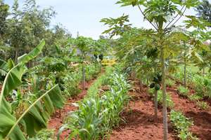 Let's grow more beautiful Forest Gardens