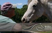 Help Us Bring Peace, Healing & Horses To Veterans