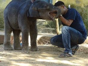 Elephant calf rescued