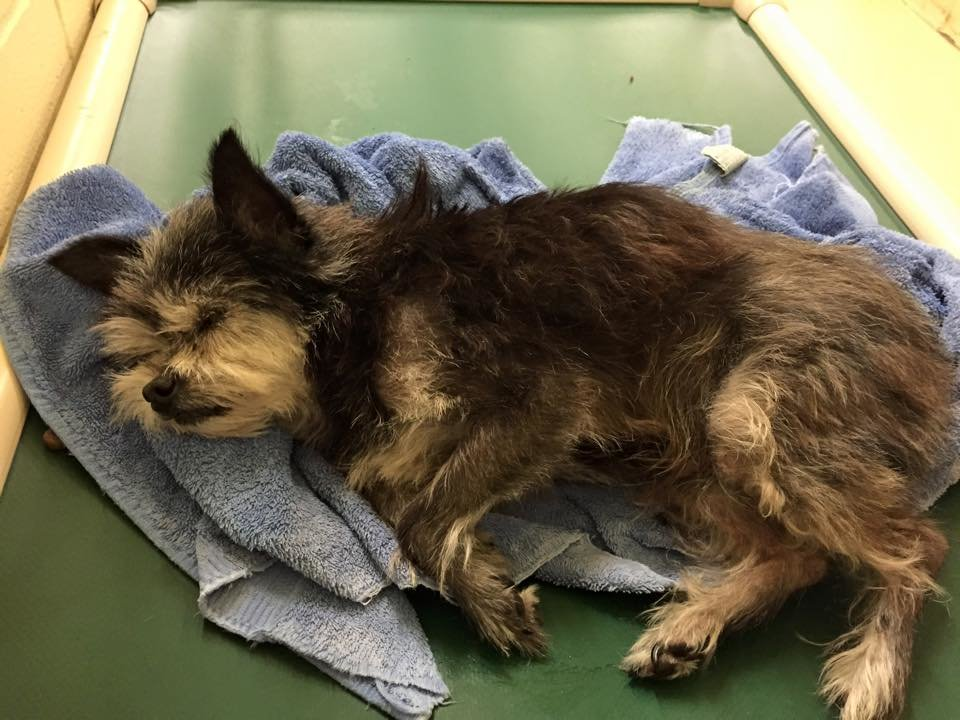 Homeless pets need your help with medical care!