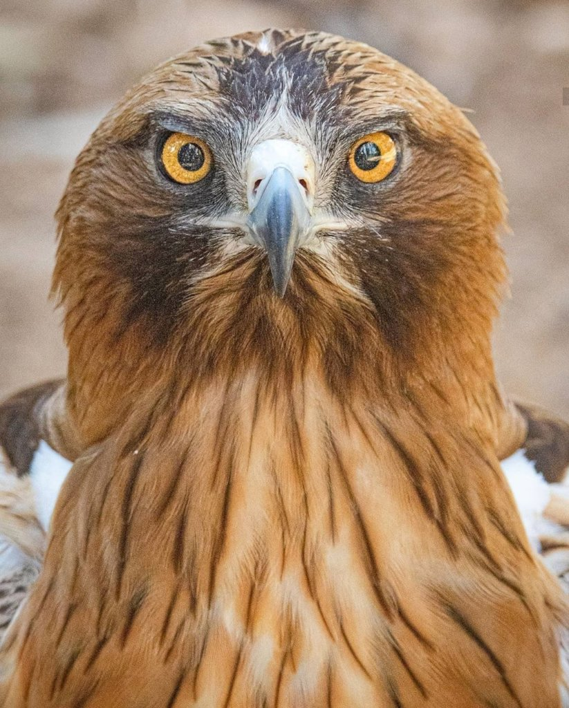 Save Israel's Birds of Prey
