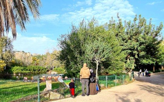 Return to the Zoo