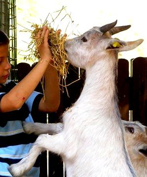 Animal Assisted Therapy for Special Needs Children