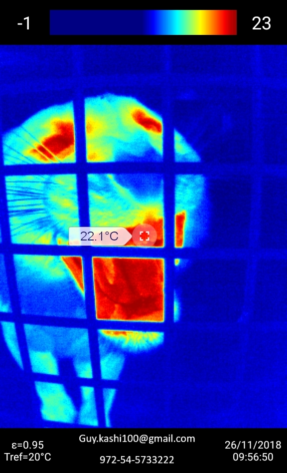 Thermo imaging of Hannah our female tigress