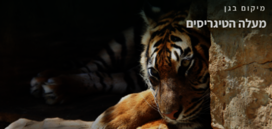 Tiger section on the Zoo's new website