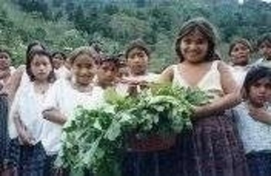 Strengthening Indigenous Communities in Guatemala