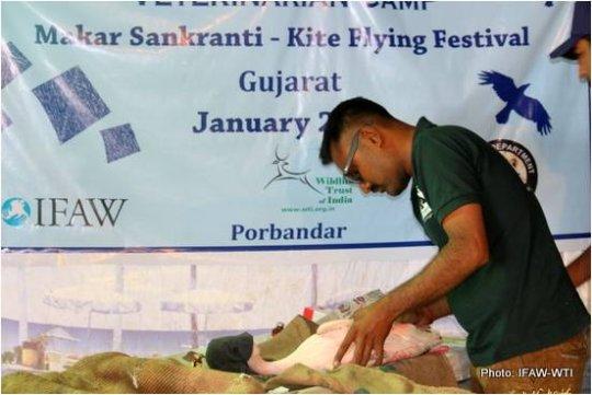 IFAW-WTI veterinarian treating a bird in Porbandar