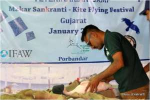 IFAW-WTI veterinarian treating a bird in Porbandar