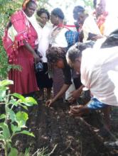 Tree planting (c) IIN