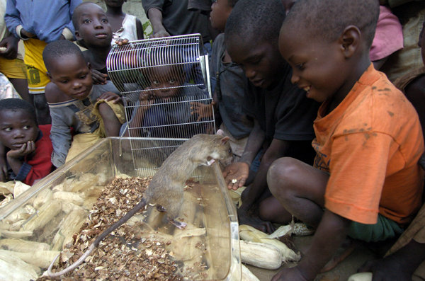Curious kids meet a HeroRAT in Mozambique