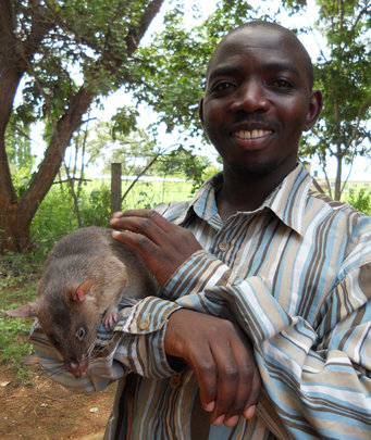 Haruni with his HeroRAT