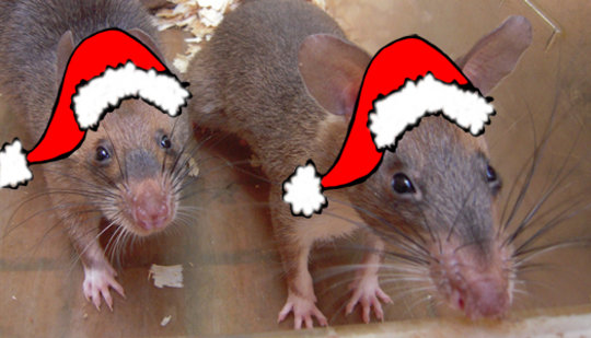 Happy HeroRAT Holidays!