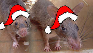 Happy HeroRAT Holidays!