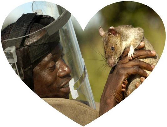 Love between a HeroRAT and trainer