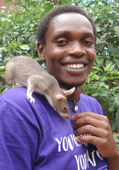 HeroRAT trainer Niko with Green Apple
