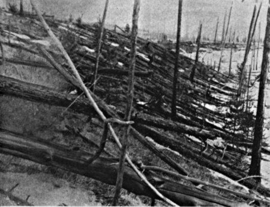 Trees leveled by the 1908 Tunguska asteroid.