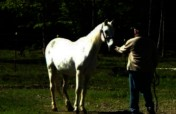 Equine Therapy for 20 Veterans in Hopkinton NH