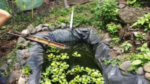 Solar pump oxygenates water at tilapia tank