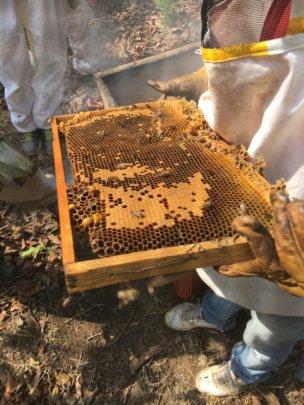 Arnica Flower Honey
