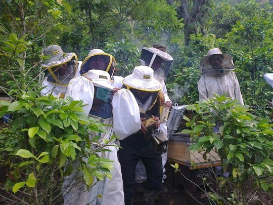 The Bee Boys with new protective gear and tools