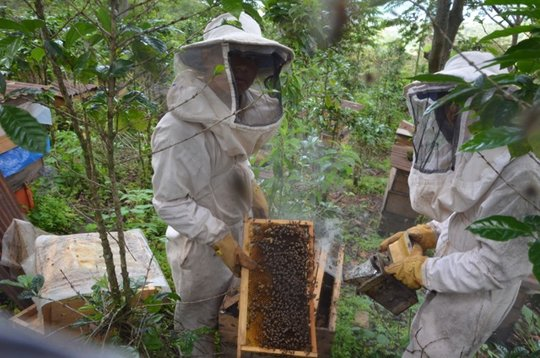 Bee Hives in the Coffee fields