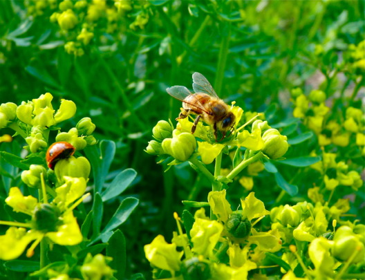 We plant the bees favorites-and others come too!