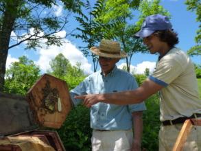 Natural hive shapes, and natural comb