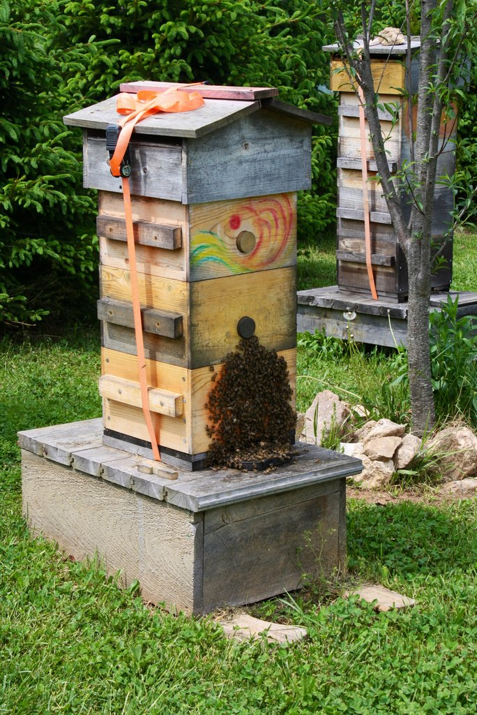 Saving the honeybee one beekeeper at a time!