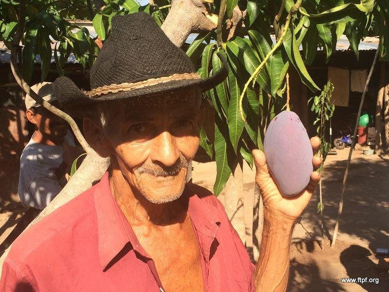 Co-op president with his FTPF fruiting mango tree