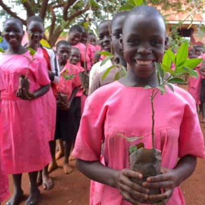 Fruit Trees For Uganda
