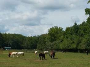 Some of the horses in pasture at IGP