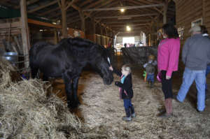 Visitors in the Barn