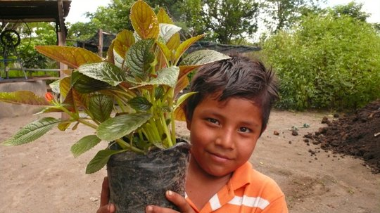 Plant trees, plant hope