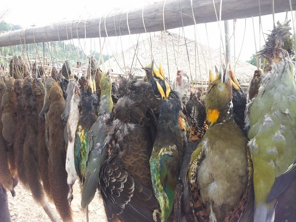 Stop mass hunting of wildlife in India