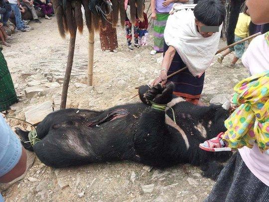 Himalayan black bear hunted during ritual masshunt