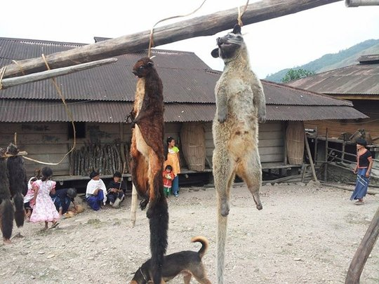 Tribal settlement and hunting