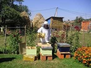 Kosovar Woman Beekeeping