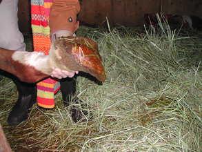Stallion's hooves prior to seizure.