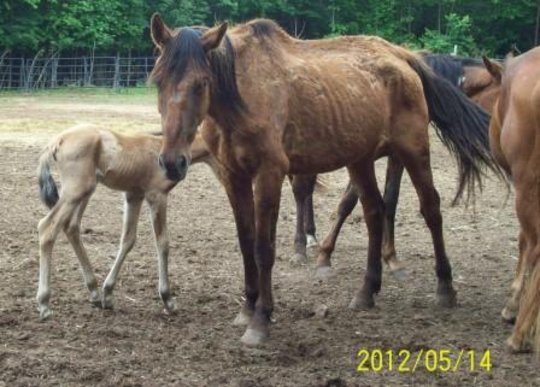 Just one of the dozens of Dinwiddie County horses.