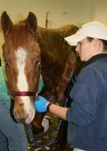 Tyler is assessed at NCSU - Large Animal Hospital.