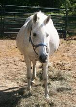 Same Mare 6 months later, close to foaling.
