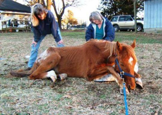 Expansion of Horse Program for 30 Horses