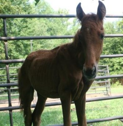 Stori, an orphaned foal, starts her new life.