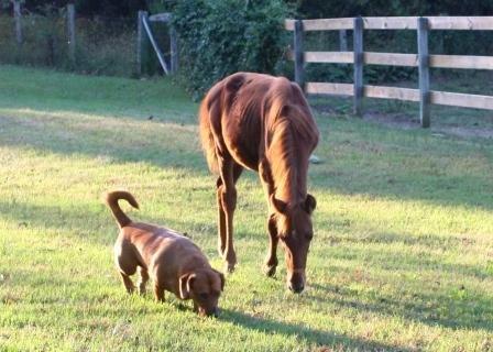"Stori and her ""buddy"" stroll around the rehab farm"
