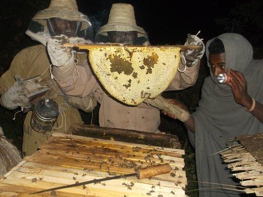 Honey harvesting in Ethiopia - after dark