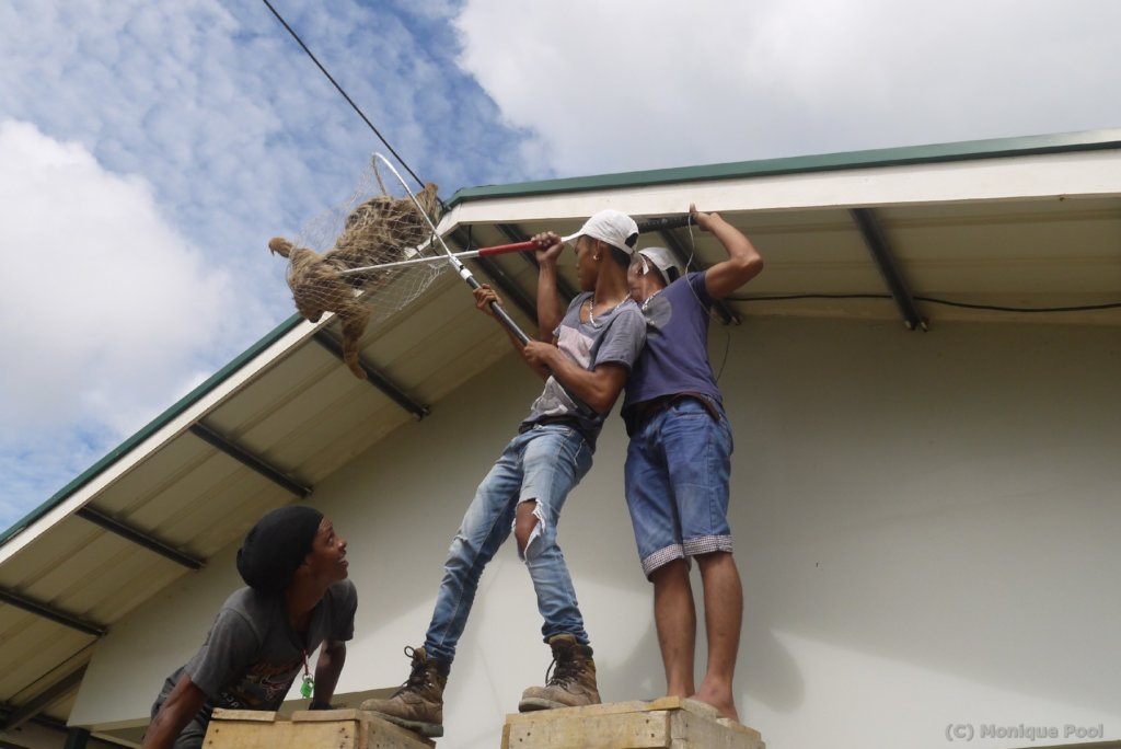 A building crew helping to bring a sloth down