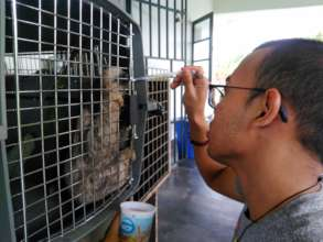 Dehydrated animals are giving fluids by volunteer