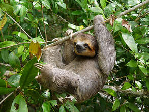 One happy sloth!